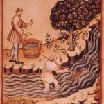 Le buone anguille della cucina medievale