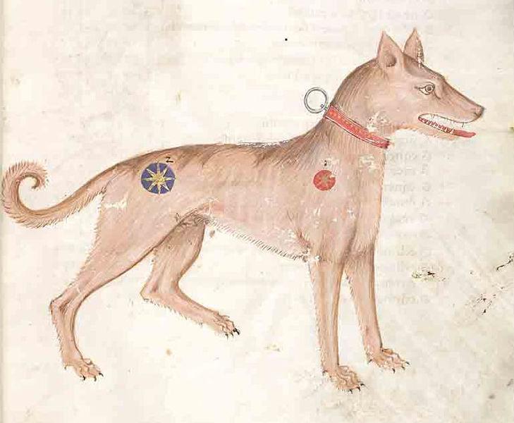 cane-manoscritto
