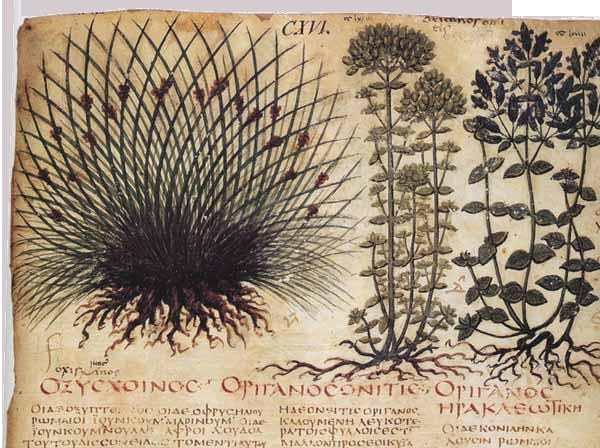 erbe-medicinali-medioevo